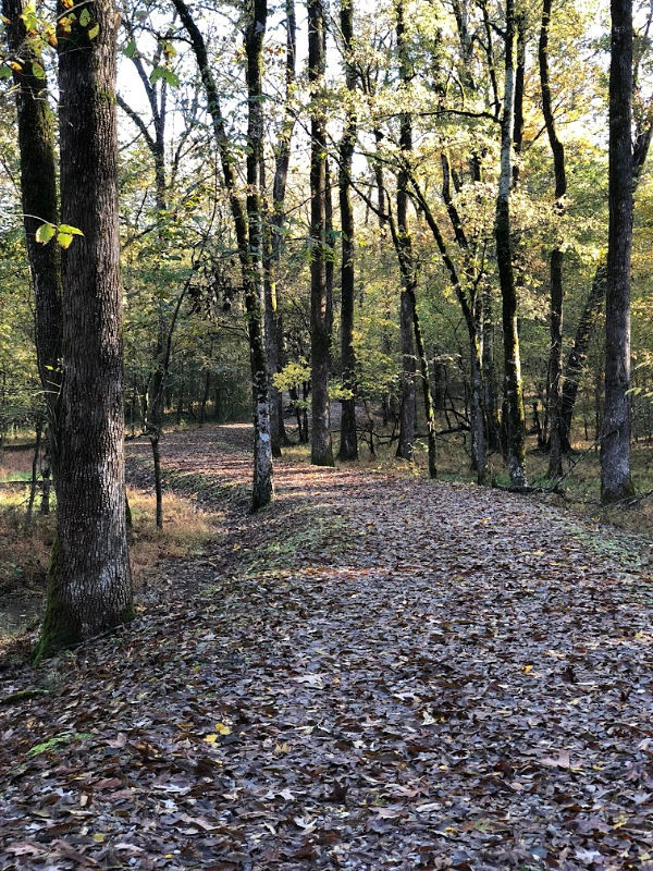 Prospect Trail, Crater of Diamonds State Park