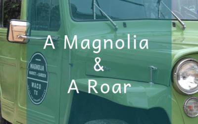 A Magnolia & A Roar