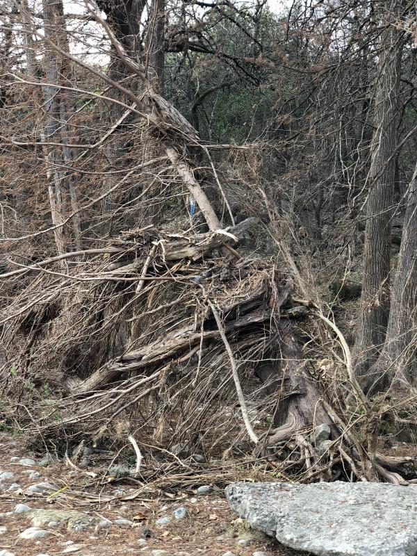 Debris on Frio River, Garner State Park