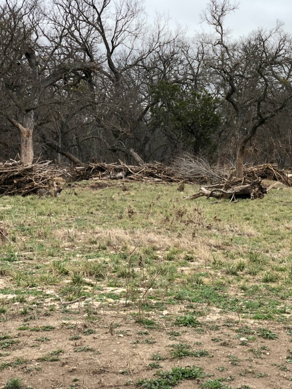 Debris at South Llano River, S. Llano State Park