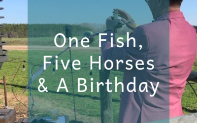 One Fish, Five Horses & A Birthday
