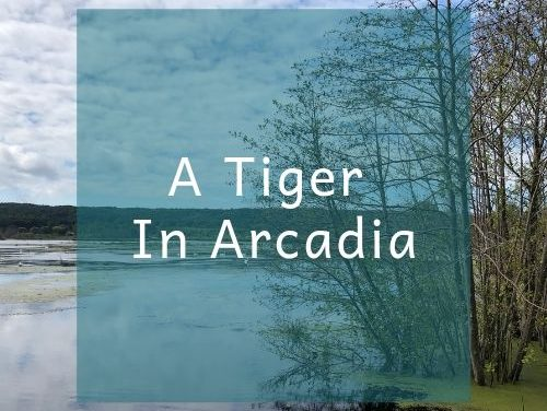 A Tiger In Arcadia